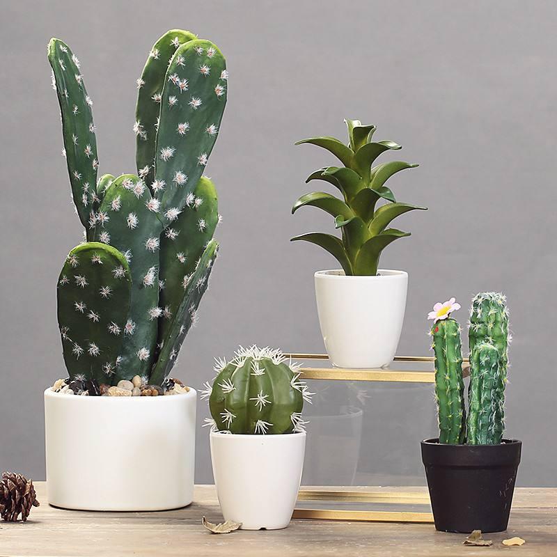 这几种夜间植物,可以净化空气,让您安眠整晚