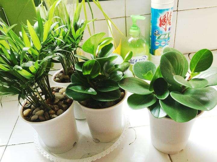 新房装修,用绿色植物除甲醛,靠谱吗?